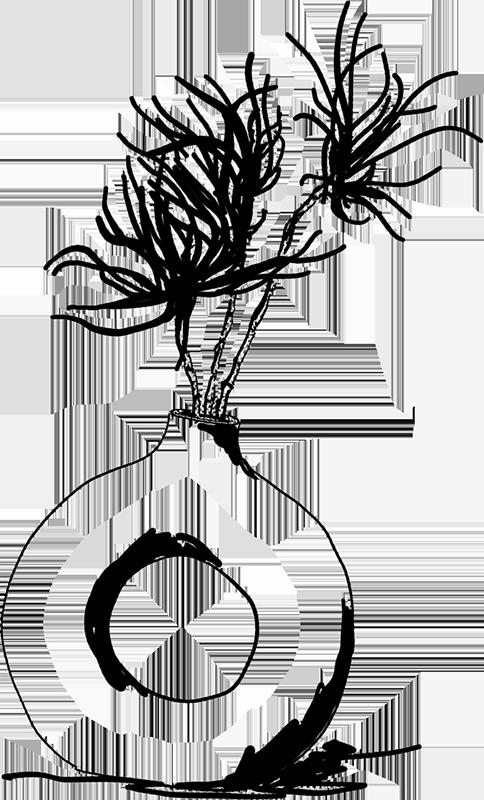 dessin au feutre d'un vase déco et sa plante